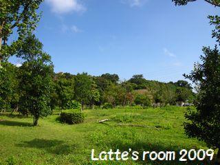 latte-1374.jpg