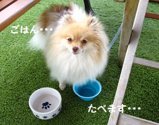 latte-1637.jpg