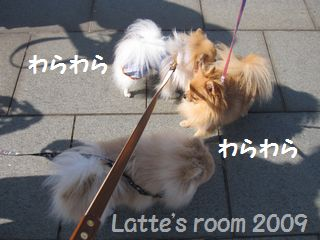 latte-1768.jpg
