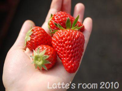 latte-2422_20100214233618.jpg
