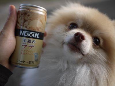 latte-3334.jpg