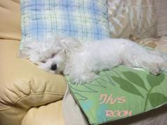 2009.08 リラックス2
