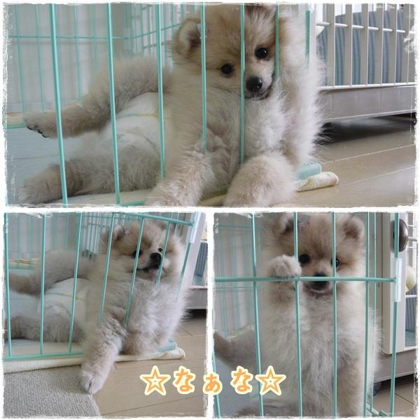 cats22.jpg
