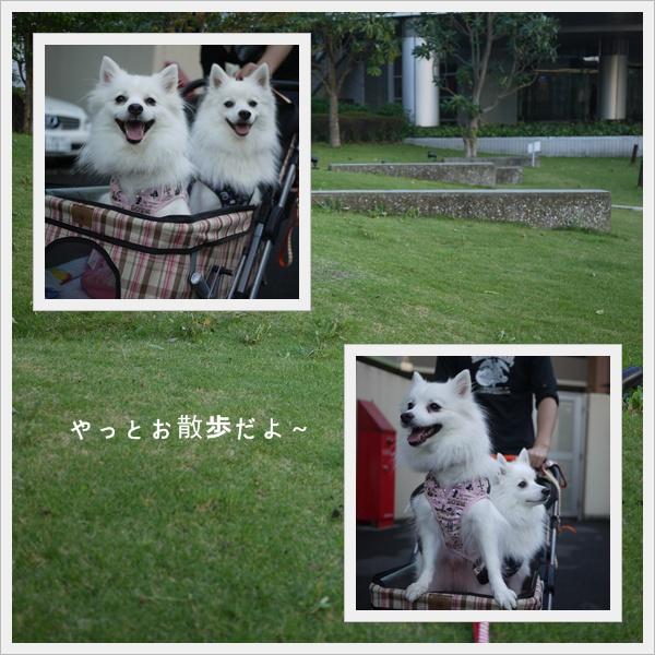 cats31.jpg