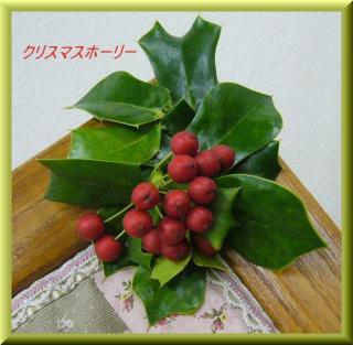 P1130960クリスマスホーリー