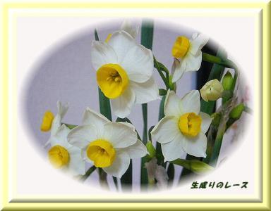 P1140072水仙