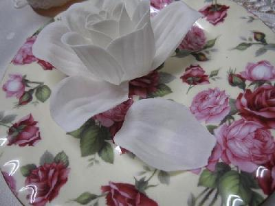 白いバラ3