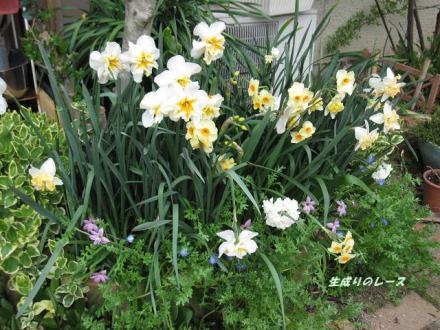 4・7花壇3