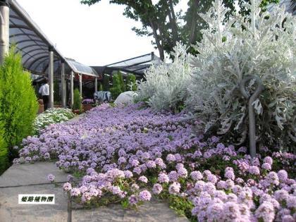 姫路植物園6