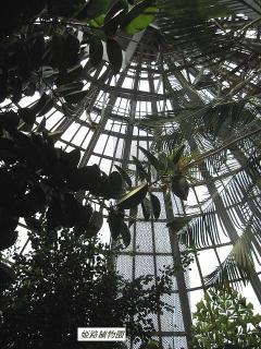 姫路植物園3