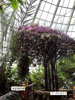 姫路植物園4