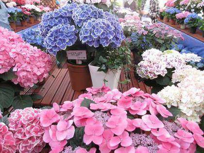 姫路植物園2