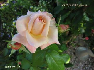 10606 薔薇