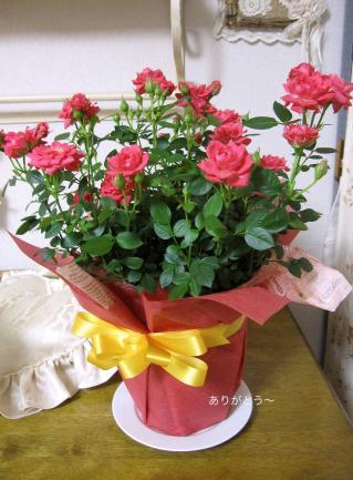 IMG_4278_20110508213532.jpg