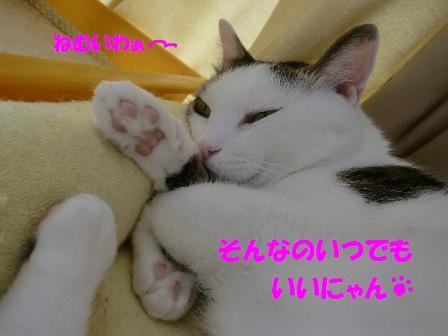コピー ~ CIMG0553