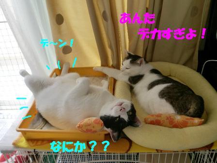 コピー ~ CIMG0637