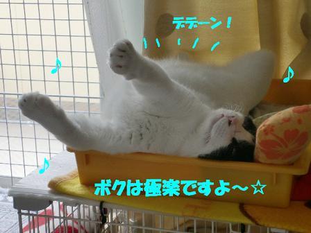 コピー ~ CIMG0635