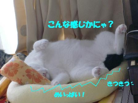 コピー ~ CIMG0630