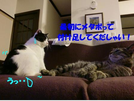 コピー ~ CIMG0221