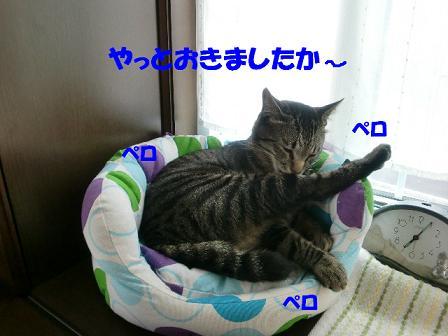 コピー ~ CIMG0448