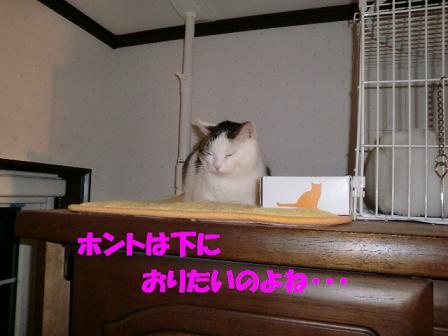 コピー ~ CIMG0157