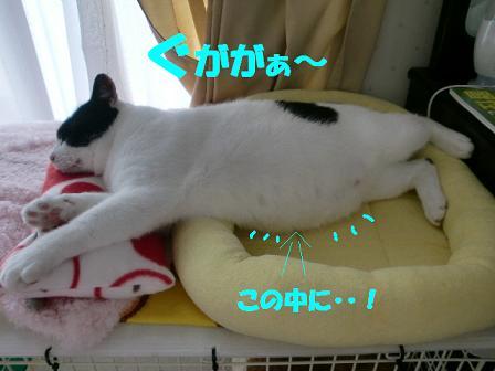 コピー ~ CIMG0499