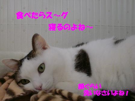 コピー ~ CIMG0109