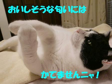 コピー ~ CIMG0622