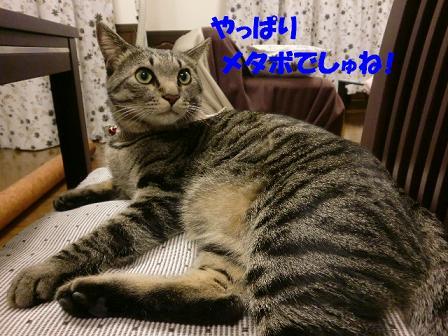 コピー ~ CIMG0038