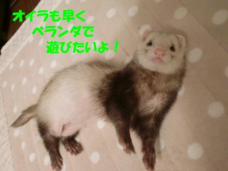 コピー ~ CIMG0400