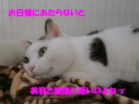 コピー ~ CIMG0110