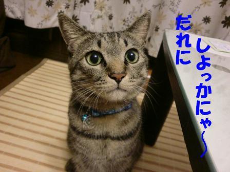 コピー ~ CIMG0550