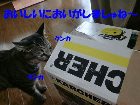 コピー ~ CIMG0671
