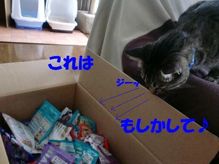 コピー ~ CIMG0666