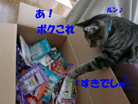 コピー ~ CIMG0670