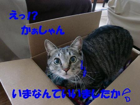 コピー ~ CIMG0674