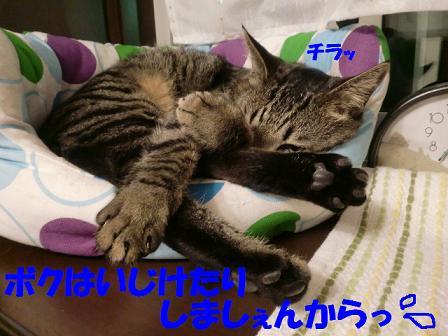 コピー ~ CIMG0496