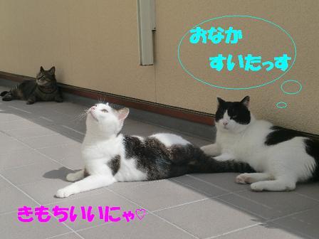 コピー ~ CIMG0321