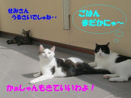 コピー ~ CIMG0320