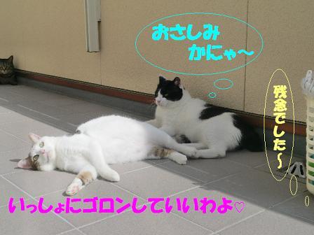 コピー ~ CIMG0316