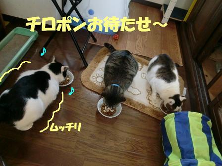 コピー ~ CIMG0293