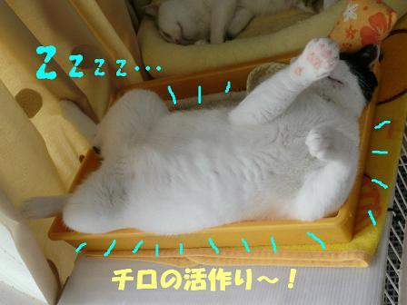コピー ~ CIMG0636
