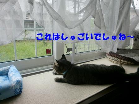 コピー ~ CIMG0655