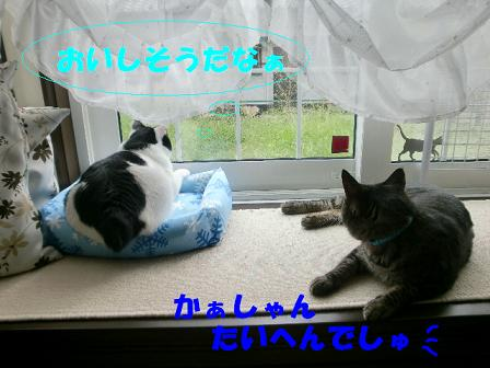 コピー ~ CIMG0659