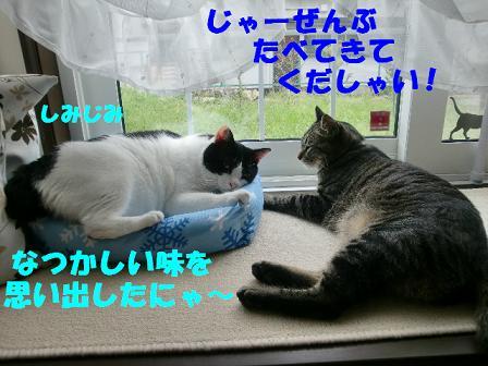 コピー ~ CIMG0661