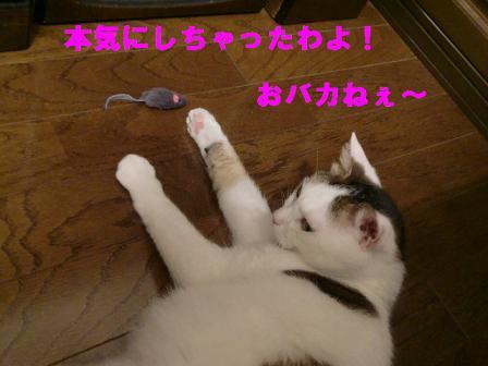 コピー ~ CIMG0467