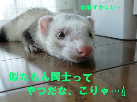 コピー (2) ~ CIMG0701