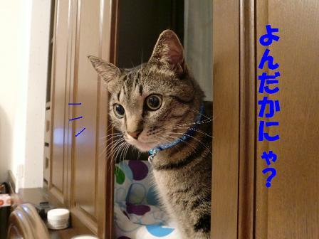 コピー ~ CIMG0488