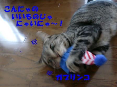 コピー ~ CIMG0683