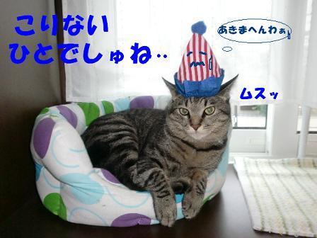 コピー ~ CIMG0691